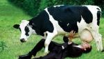 Врачи мира: Молоко опасно для здоровья человека
