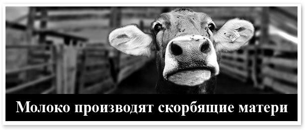 Молоко производят скорбящие матери