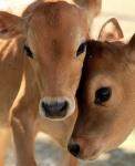 Всемирный                      День защиты животных от людей