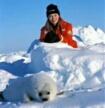 О защите морских тюленей. О Ребекке Альдворт