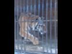>Что происходит с цирковыми животными