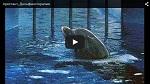 Арестант.  Дельфинотерапия: страдания животных и спекуляция на здоровье людей
