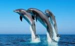 Дельфины                      - жертвы дельфинариев
