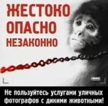 Фотобизнес с дикими животными - жестоко, опасно, незаконно