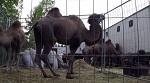 Петрозаводск против цирка