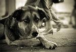 ПРЕДОТВРАТИТЬ гибель животных к ЧМ-2018 и ПРИНЯТЬ полноценный Закон в защиту животных