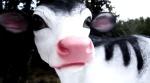Премьера новых клипов: Vegan                      - Земляне | Vegan - E